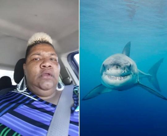 You Tube shark