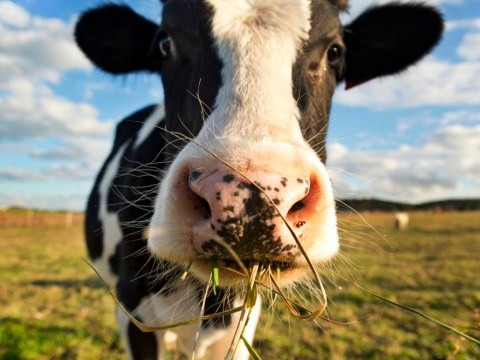 7 reasons to ditch dairy foods now
