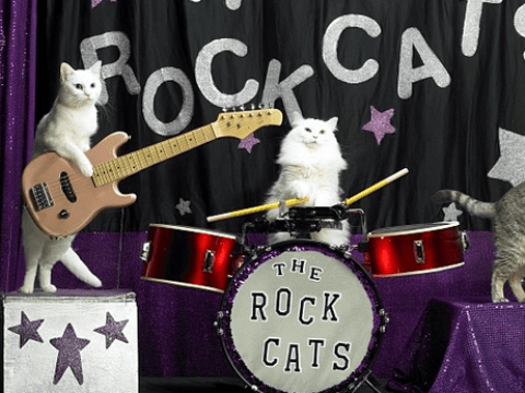 Dream job alert: You can now run away and join the cat circus – and get paid for doing it