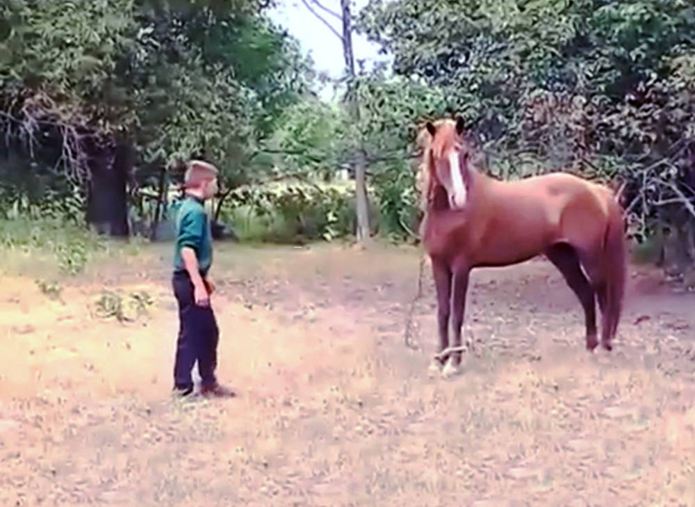 "Pic shows: Dream the horse and the boy taking care of her. A six-year-old boy has had his penis bitten off by a rogue horse. The youngster was riding past the mare on his bicycle when it suddenly attacked him, knocking him off and biting off his willy. The screaming child ran back to his shocked dad, who called an ambulance and then searched for and found the severed member. The astonishing attack happened in Zhytomyr Oblast in Northern Ukraine where the mare was a family pet. The father, who did not wish to be identified, said: ""I was dealing with the horses when I heard my boy screaming, she bit it of, she bit it of! ""I put my hands onto his crotch to stop the bleeding and called ER."" The boy was rushed to the nearest regional hospital for emergency surgery. Doctor Igor Vishpinsky said: ""We have had difficult cases in the last but we never experienced something like this. Maybe a severed finger or something from a horse bite, but definitely nothing like this. It was an extraordinary situation."" The surgeons have managed to stitch back the boyís penis but they do not know whether the operation has been successful yet and say only time will tell if the operation worked. (ends)"