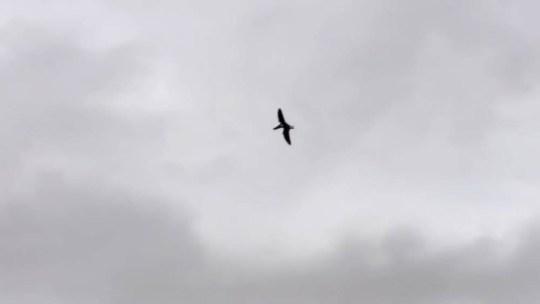 A pterodactyl has been seen flying over Idaho