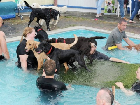 This swimming pool allows dogs and it looks like total chaos