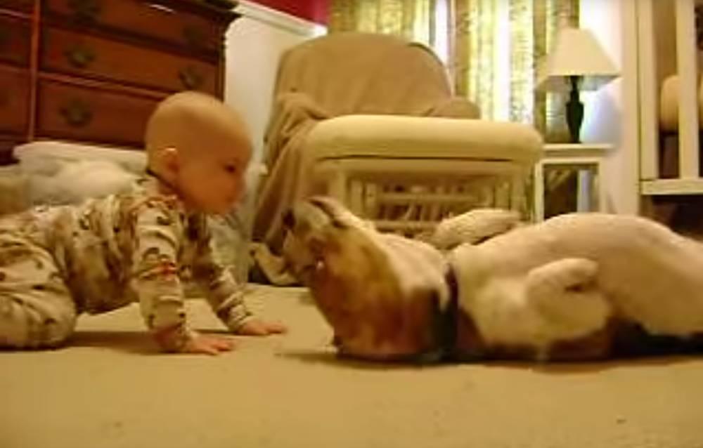 Dog baby meet
