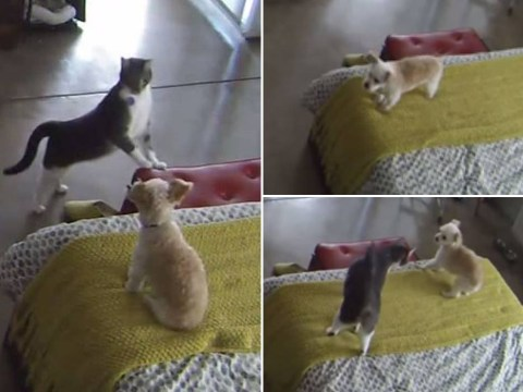 This is basically a cat telling a dog to 'shut the hell up'