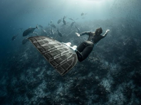 Freedivers swim with underwater life in spectacular photo series