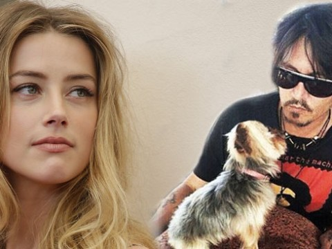 Amber Heard is facing 10-years in prison for illegally bringing her dogs to Australia