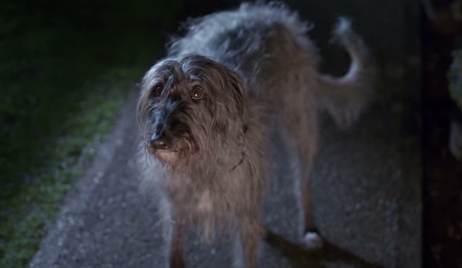 baxter the dog I will survive blue cross advert