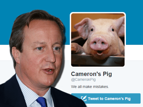 David Cameron's pig has its own Twitter account, naturally
