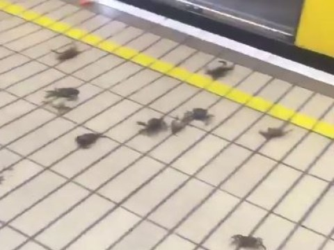Some crabs tried to get on the Newcastle Metro without a ticket