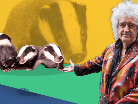 Brian May held a 'funeral' today for all the badgers killed in the cull
