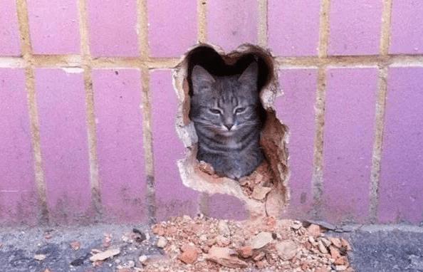 pawshank redemption kitten in brick wall from kitten blockbuster trend