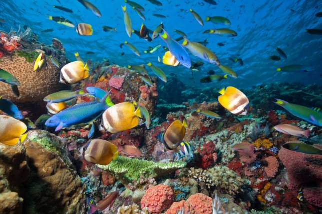 Fish Rush Hour at Coral Reef, Komodo National Park, Indonesia