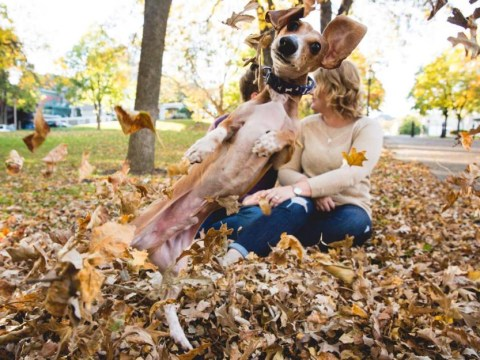 Photobombing dog makes cheesy engagement pics about a million times better