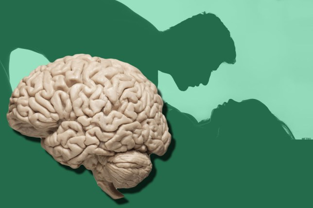 Effects of porn on the brain