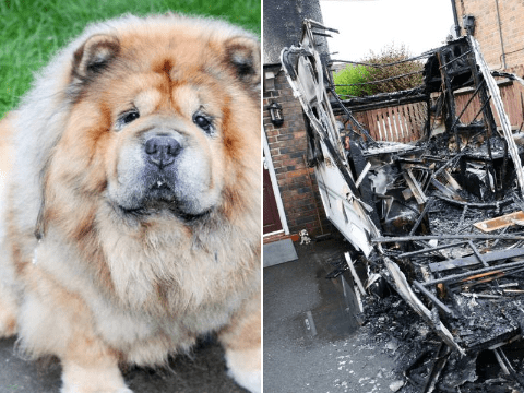 Hero dog saves his family from burning alive after arson attack