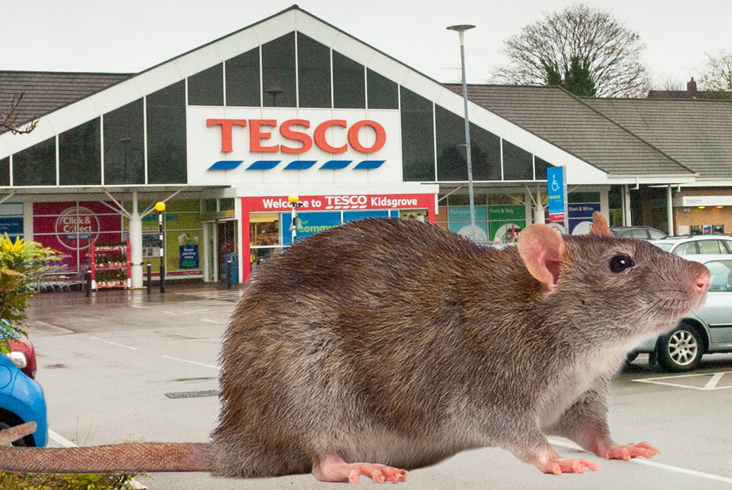 Exiled rats from Tesco move into neighbouring houses