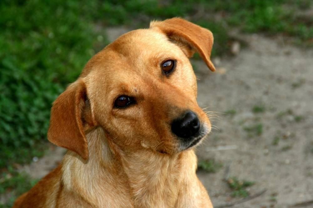 dog-763057-1280 - flickr.jpg