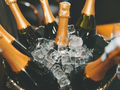 Champagne DOESN'T stop you from developing dementia (unless you're a rat)