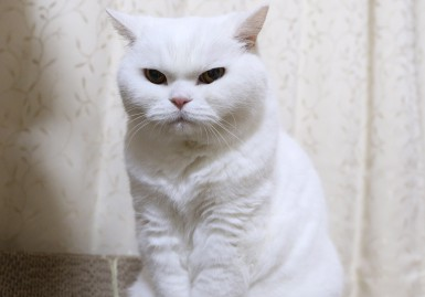 This cat that hates everyone is the new internet animal to obsess over