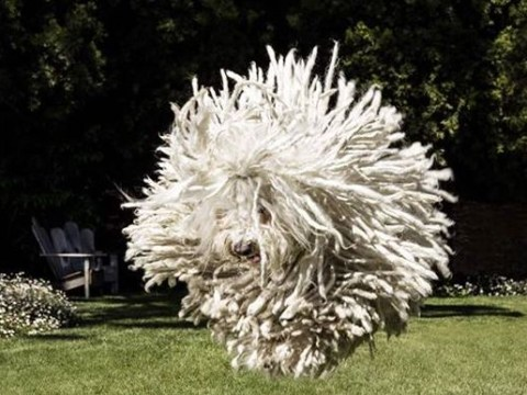 Mark Zuckerburg's dog looks like an exploding ball of fluff in this Facebook picture