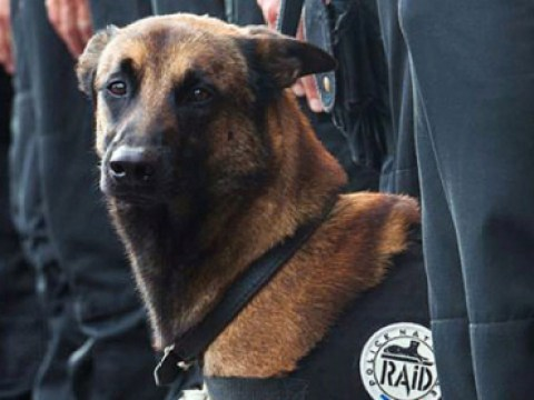 Diesel's handler talks for first time since the police dog died in St Denis siege
