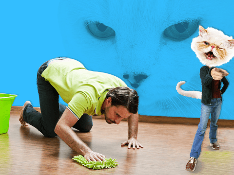 Quiz: Are you a slave to your cat?