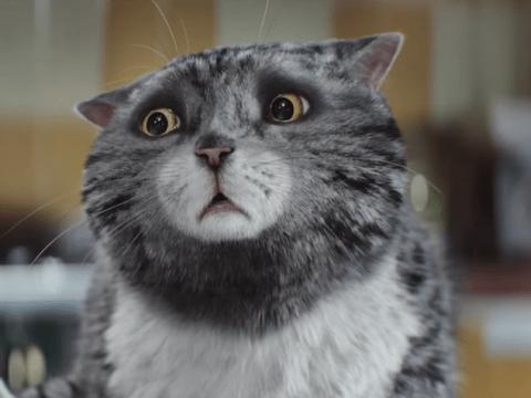 Sainsbury's Christmas advert star Mog the cat for blockbuster movie?