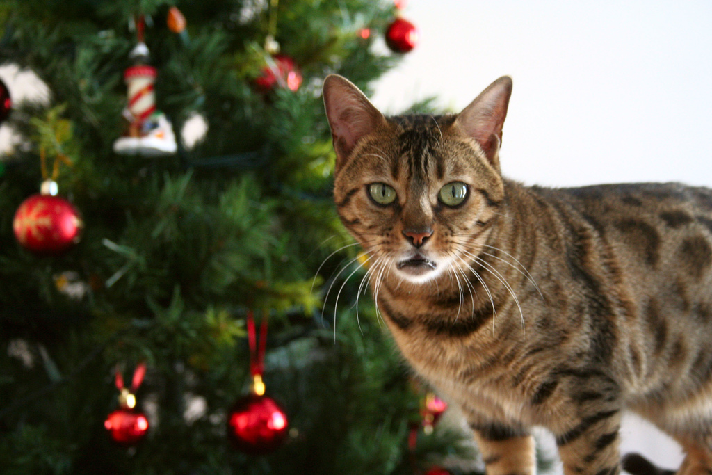 7 pictures that sum up exactly why Christmas trees are a no-go when you have cats