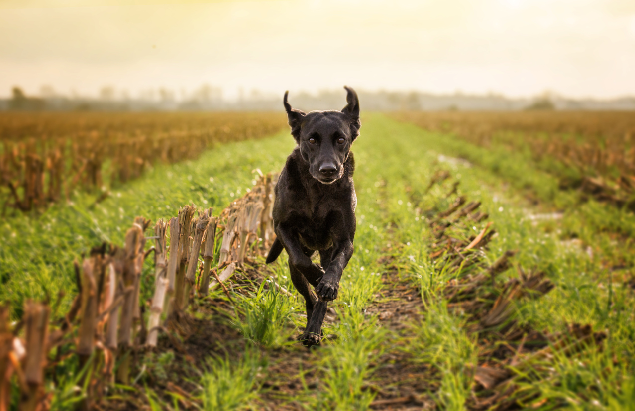 11 life lessons you can learn from your dog