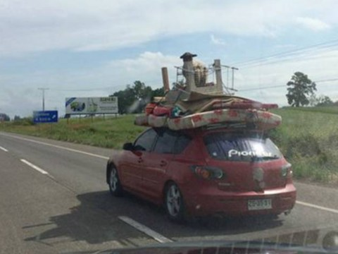Just a lamb riding on top of a car like an absolute farmyard 'G'