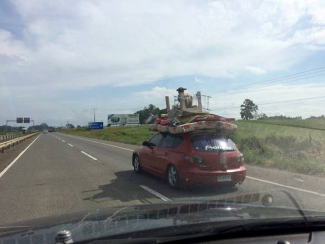 """Pic shows: Lamb on the car roof. The stunned passengers aboard a car on a remote road in Chile had trouble believing their eyes when they saw a car ahead of them...with a LAMB riding on the roof. The sheepish traveller was atop the car as it travelled on a highway near the city of Temuco, in the south Chilean province of Cautin. The passengers took pictures to show their family and friends and later posted them on social network sites. The pictures show a small red car piled high with furnishings, including a mattress, and table....and on top of the pile the lamb. It seemed quite happy with its strange perch, seemingly enjoying the scenery as the car drove along. According to the rules of traffic in Chile, vehicles must have """"technical constructions characteristics and dimensions for transporting passengers, cargo and living animals,"""" otherwise face a fine. But the lamb, like its owner, obviously hadn't read the highway code. (ends) ¿¿¿¿¿¿¿¿¿¿ ¿¿¿¿¿¿¿¿¿¿ ¿¿¿¿¿¿¿¿¿¿"""