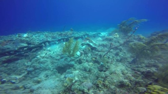 Royal Caribbean cruise lines was given permission to anchor on a protected reef ... so it did. Source: YouTube/Scott Prodahl