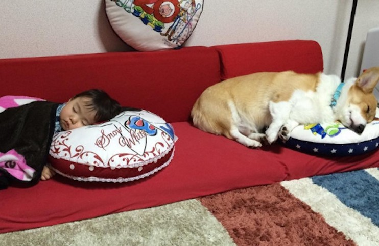 corgi and baby friendship