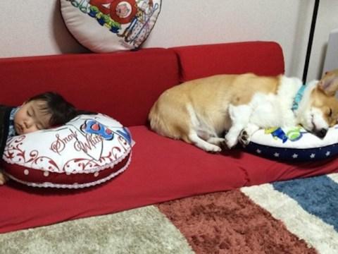 Sleepy baby and corgi have the cutest friendship ever