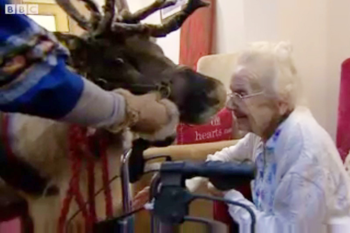 Cupid the reindeer visits care home to cheer up residents BBC