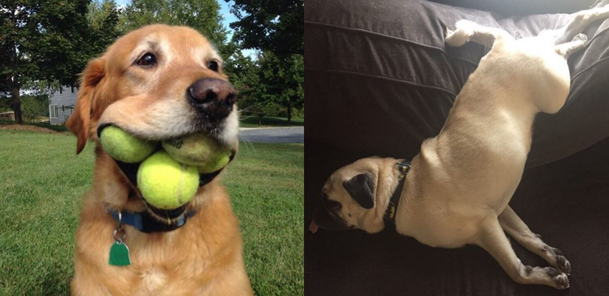 These dogs are all winners (Picture: We Rate Dogs/Twitter)