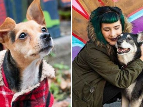 Beautiful photos of rescue dogs show the difference a happy home can make