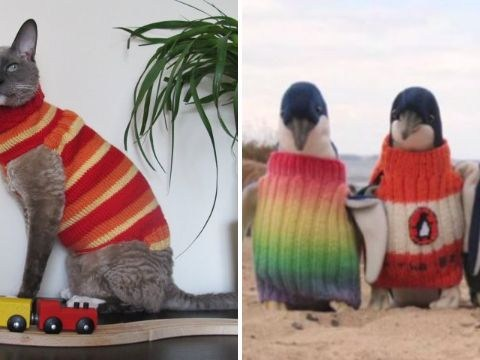 10 adorable animals in woolly jumpers to brighten your day