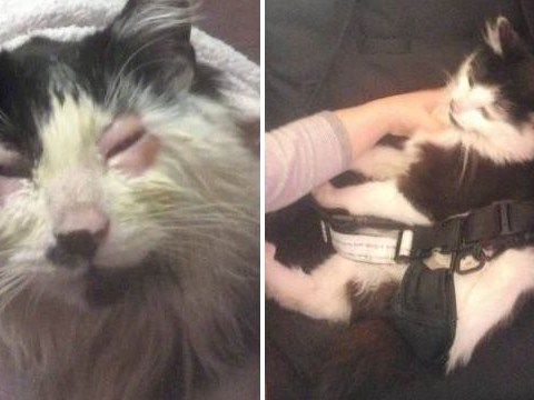 Someone glued a kitten's eyes shut in a horrific act of cruelty