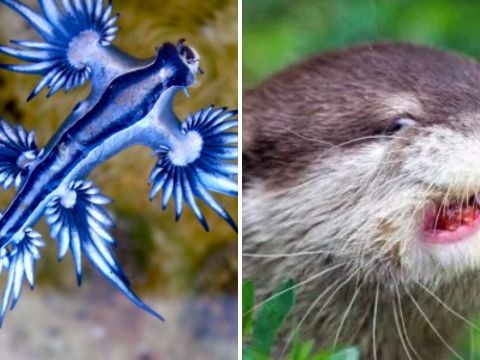 8 of the most underrated animals