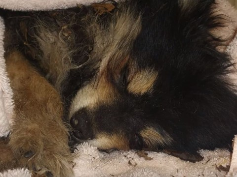 Someone left a puppy to freeze to death in an outdoor dumpster