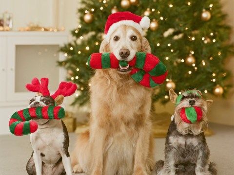 The ultimate doggy Christmas gift guide