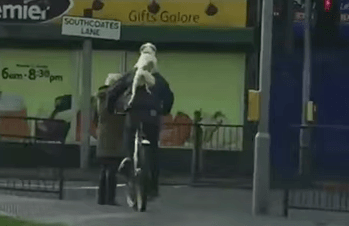 Dog hitches a ride on his owner's back, inspires us all