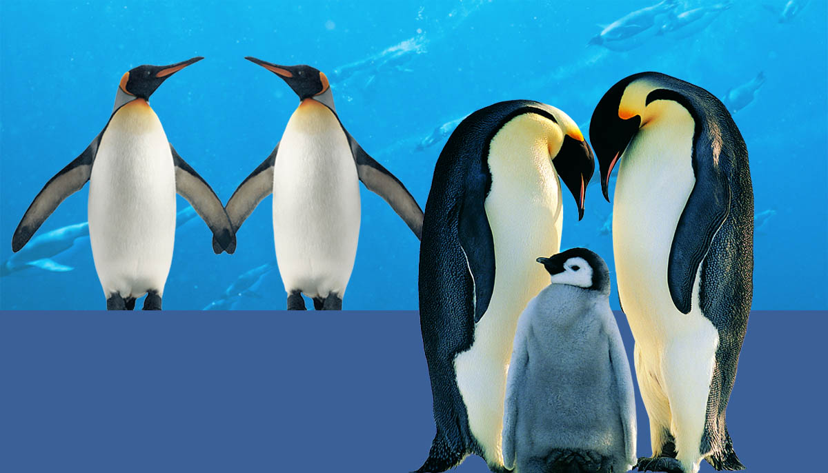 7 little known and awesome facts about penguins