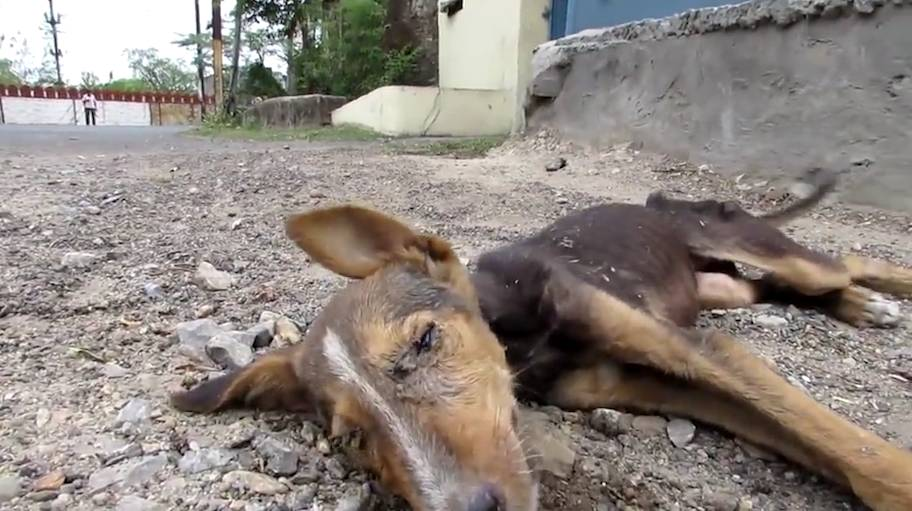 Dying puppy wags her tail at rescuers and the feels are strong