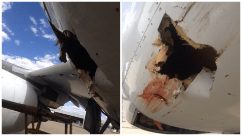 This is what happens when a bird collides with a plane