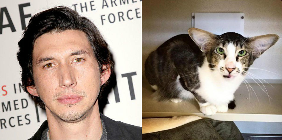 This cat looks weirdly like Star Wars: The Force Awakens' Adam Driver