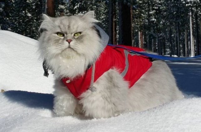 gandalf the cat in the snow