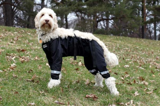how would a dog wear trousers answered