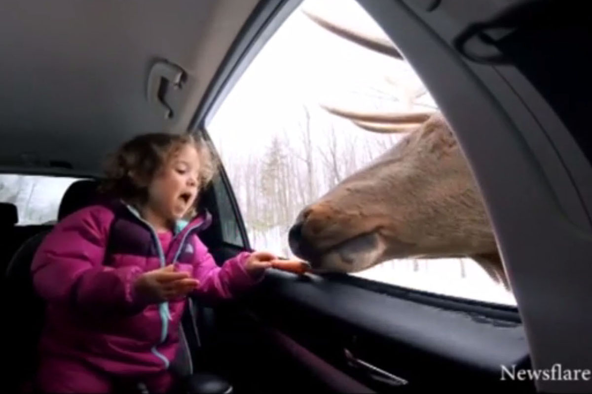 The girl is pretty excited about her new friend (Picture: YouTube)